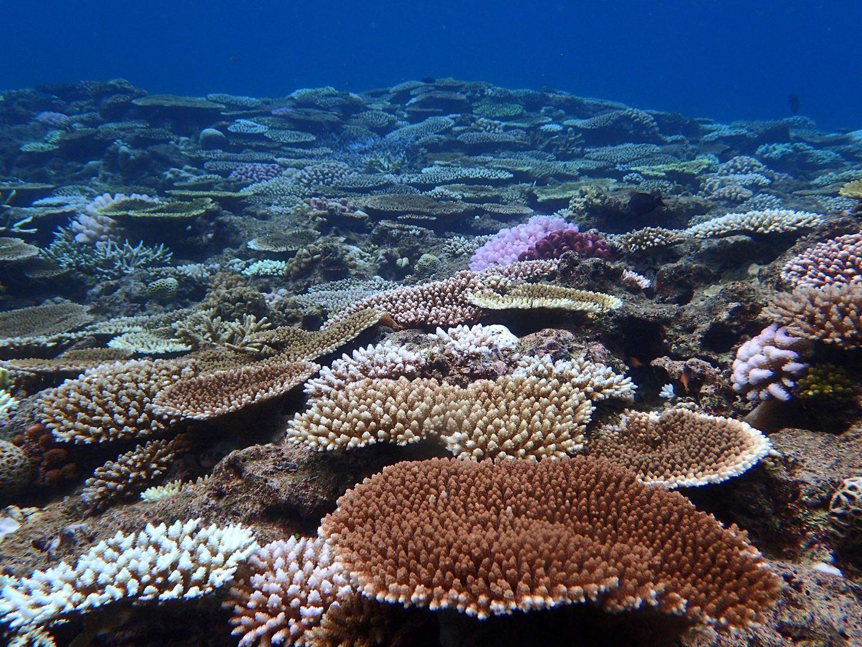 沖縄付近のサンゴ礁