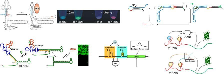 Nucleic Acid Chemistry And Engineering Unit Yohei Yokobayashi