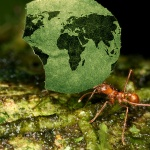 Global Ants Project