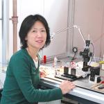 Yoko Yazaki-Sugiyama